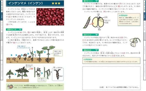 Z会中学受験シリーズ植物